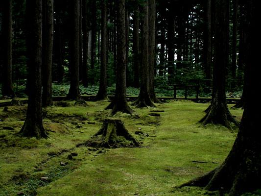 日吉神社・苔の森